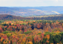 The Best Driving Routes to Enjoy This Fall's Foliage